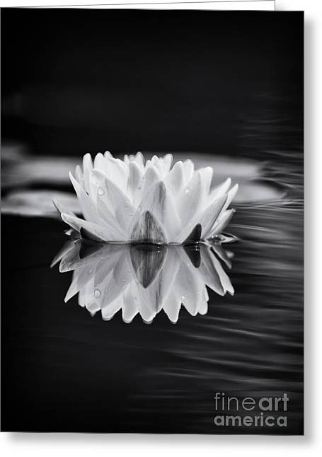 Aquatic Plant Greeting Cards - Water Lily Reflection Greeting Card by Tim Gainey