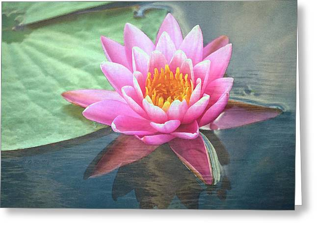 Water Lily Greeting Card by Sandi OReilly