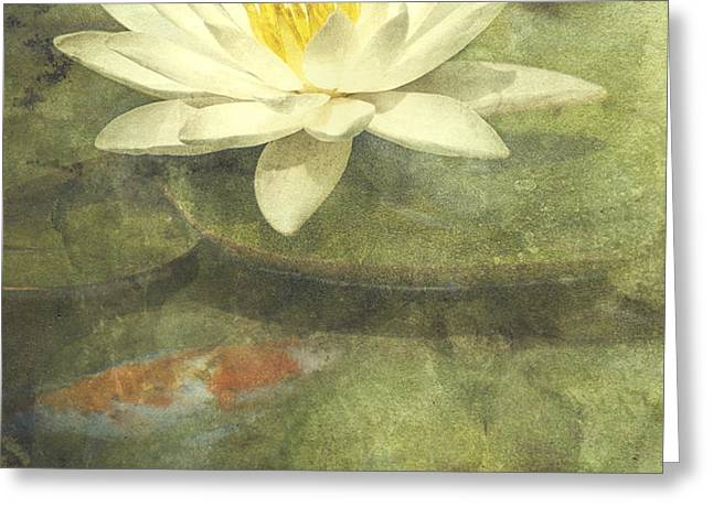 Water Lily Greeting Card by Scott Norris