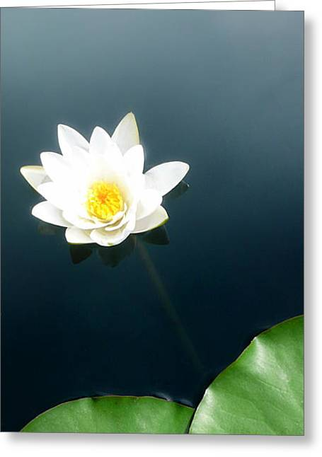 Water Lilly Greeting Cards - Water Lily Study 2 Greeting Card by Ron Regalado