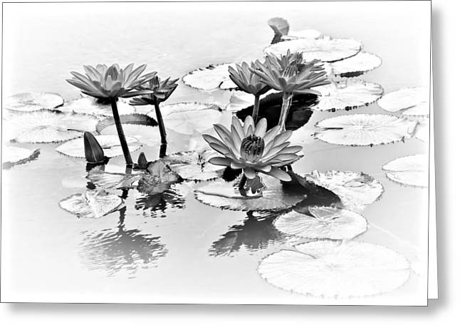 Lilly Pads Greeting Cards - Water Lily Study - bw Greeting Card by Nikolyn McDonald