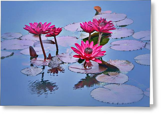 Lilly Pads Greeting Cards - Water Lily Study Greeting Card by Nikolyn McDonald