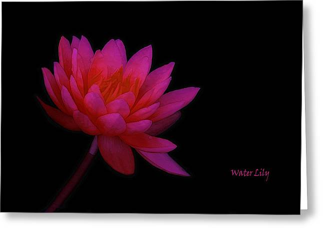 Flower Still Life Prints Greeting Cards - Water Lily Greeting Card by Tom York Images