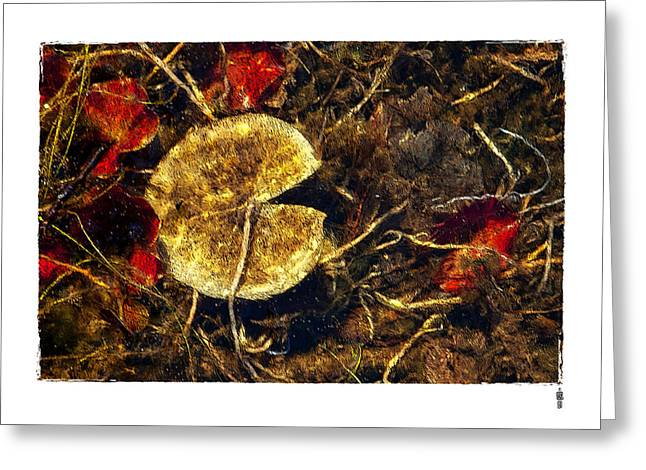 Pacman Digital Art Greeting Cards - Water Lily Under The Ice Greeting Card by Roger Winkler