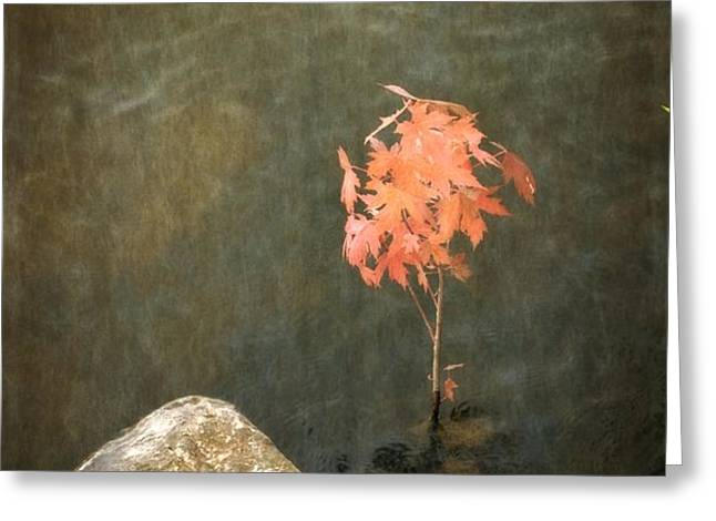 Water Maple Greeting Card by Michelle Calkins