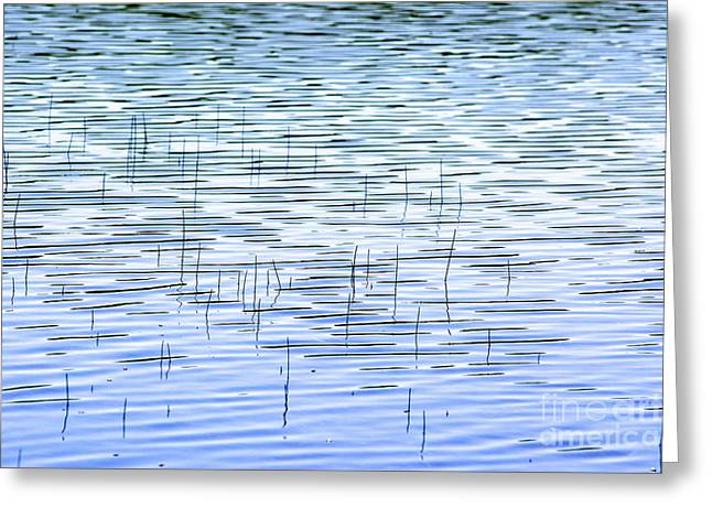 Body Of Water Greeting Cards - Water plants. Greeting Card by Bernard Jaubert