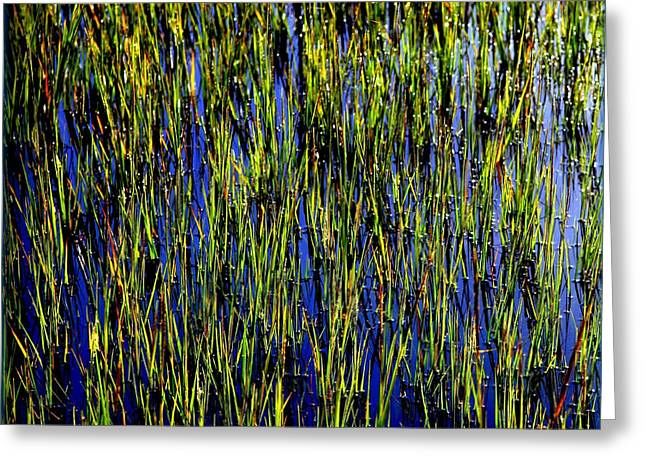 Reflection In Water Greeting Cards - Water Reeds Greeting Card by Karen Wiles