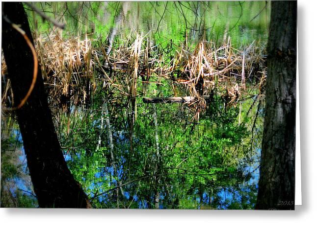 Watson Lake Reflections Greeting Cards - Water Reflection Under the Cattails Greeting Card by Aaron Burrows