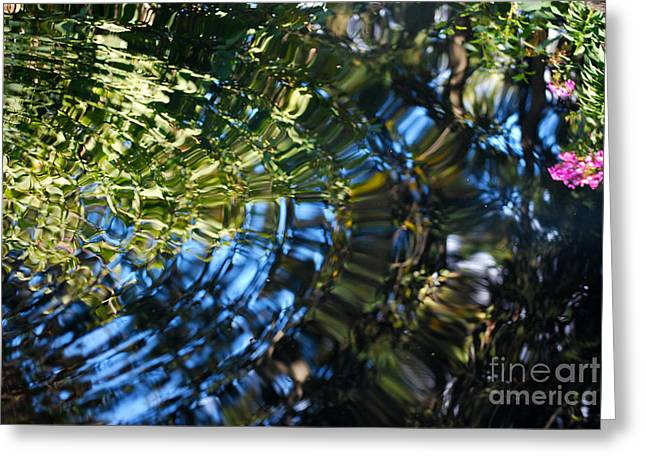 Botanic Greeting Cards - Water Reflections 4 Greeting Card by Nancy Mueller