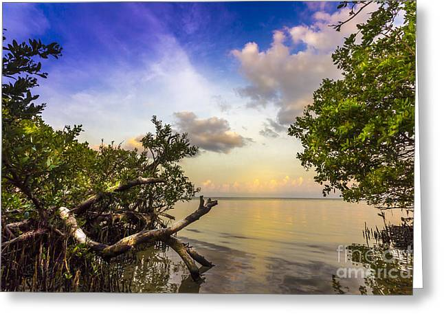 Tampa Bay Greeting Cards - Water Sky Greeting Card by Marvin Spates