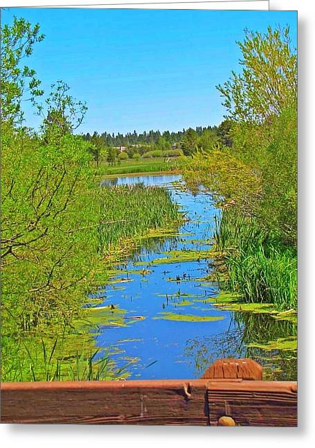Water Lilly Greeting Cards - Water Trail Greeting Card by Danielle States