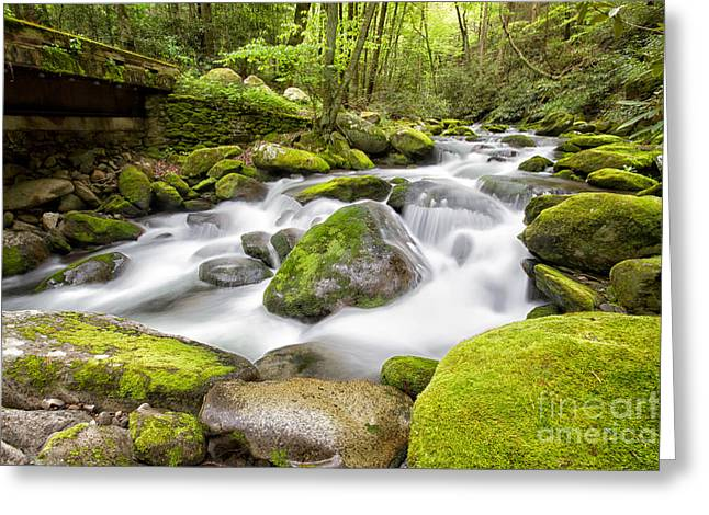 Moss Green Greeting Cards - Water under the Bridge Greeting Card by Todd Bielby
