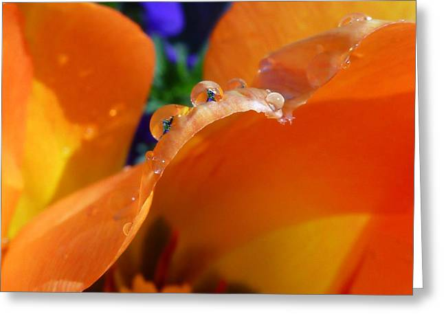 Spring Bulbs Greeting Cards - Water Worlds Greeting Card by Connie Handscomb
