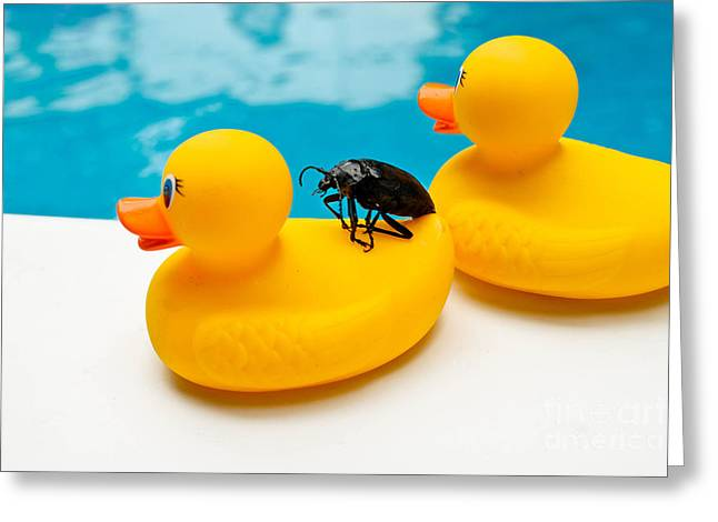 Perched Greeting Cards - Waterbug takes Yellow Taxi Greeting Card by Amy Cicconi