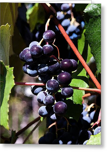 Concord Grapes Greeting Cards - Watercolor Grapes Greeting Card by Lisa Dugger