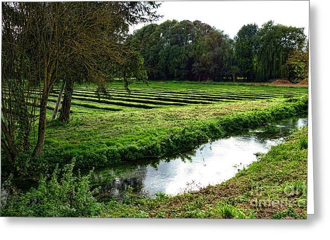 Watercress Greeting Cards - Watercress Field Greeting Card by Olivier Le Queinec