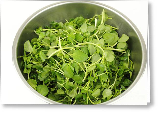 Watercress Greeting Cards - Watercress in a Stainless Steel Bowl Greeting Card by Lee Serenethos