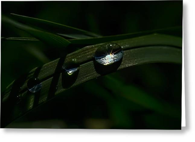 Reflections Of Sun In Water Greeting Cards - Waterdrop on leaf with light shining from the inner of the raindrop Greeting Card by Leif Sohlman