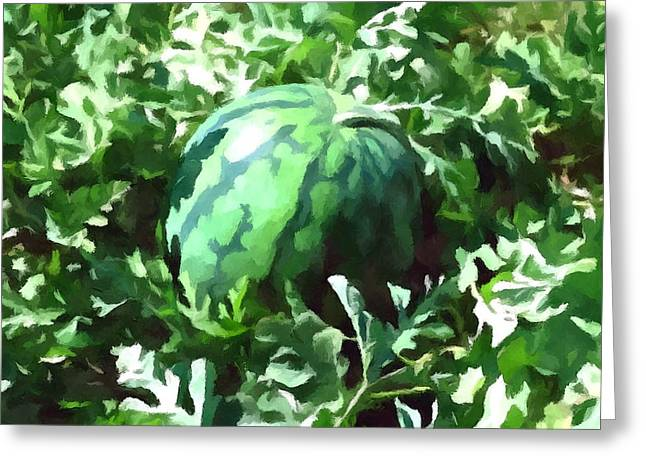 Waterelons in a vegetable garden Greeting Card by Lanjee Chee