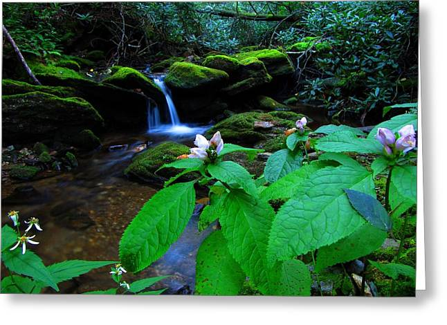Recently Sold -  - Moss Greeting Cards - Waterfall and Flowers Greeting Card by Mountain Professor