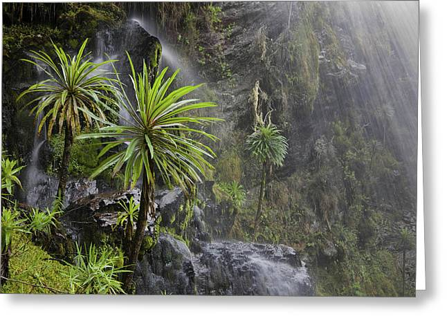 Waterfall At Mount Stanley, Ruwenzori Greeting Card by Martin Zwick