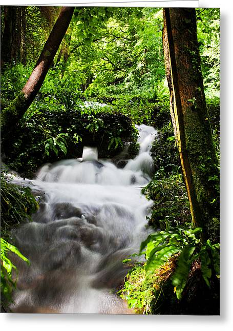 Waterfall Greeting Card by Kris Dutson