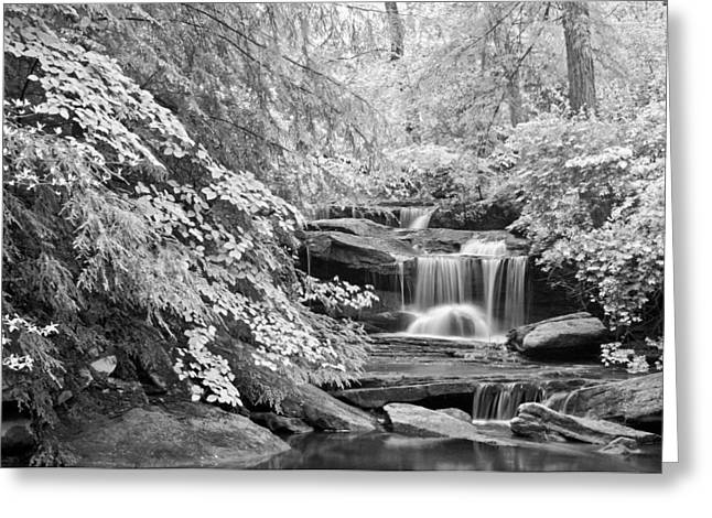 Walden Greeting Cards - Waterfall on the Trail to Mabbitt Spring Greeting Card by Tom and Pat Cory