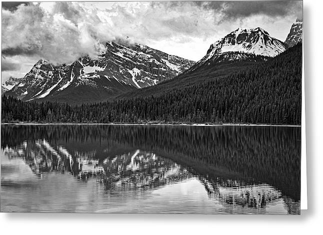 Reflecting Water Greeting Cards - Waterfowl Lake - Black and White Greeting Card by Stuart Litoff