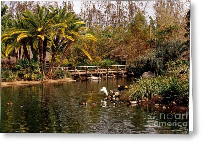 Naturalistic Greeting Cards - Waterfowl Pond Greeting Card by Jim Corwin