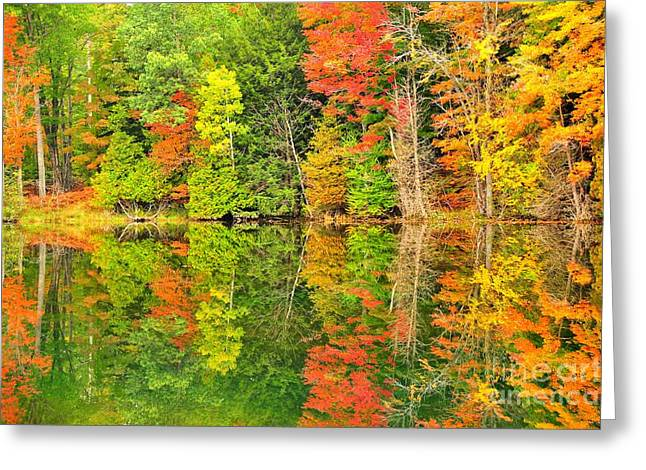 Best Sellers -  - Fall Trees Greeting Cards - Waterfront Kaleidoscope Greeting Card by Terri Gostola