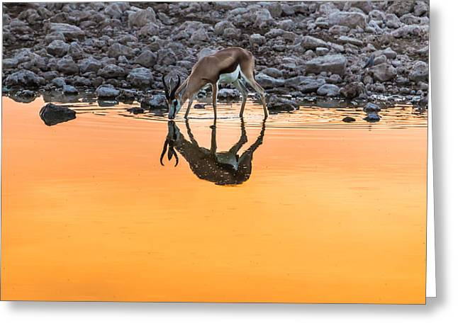 Ripples Greeting Cards - Waterhole Sunset Greeting Card by Duane Miller