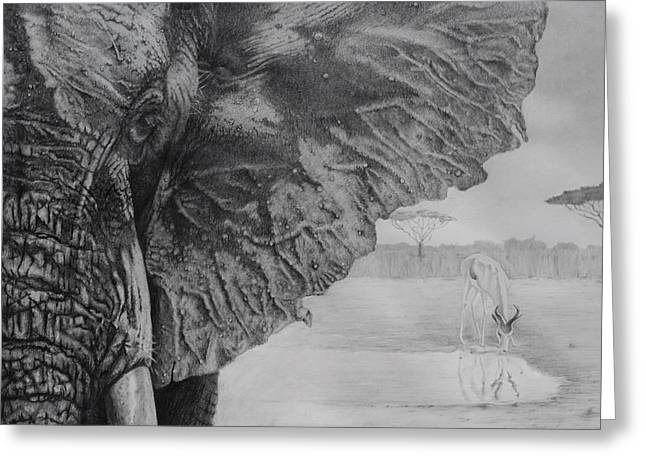 Waterhole Greeting Card by Tim Dangaran