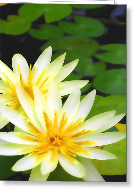 Lotus Full Bloom Greeting Cards - Waterlilies in pond Greeting Card by Amber Nissen
