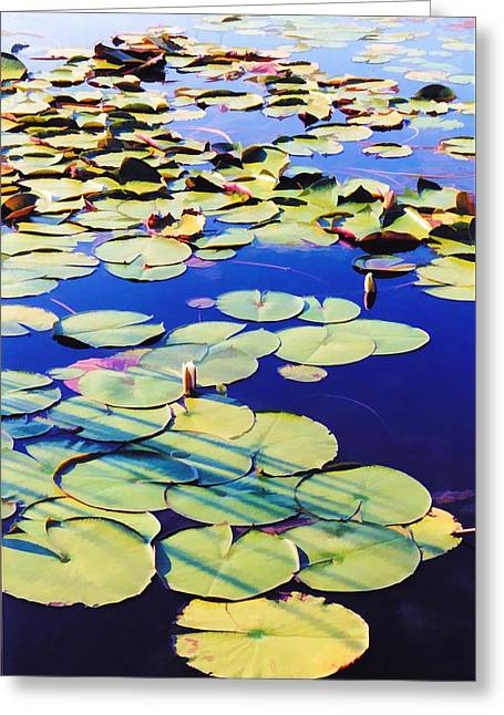 Waterlilies Greeting Card by Jan Amiss Photography
