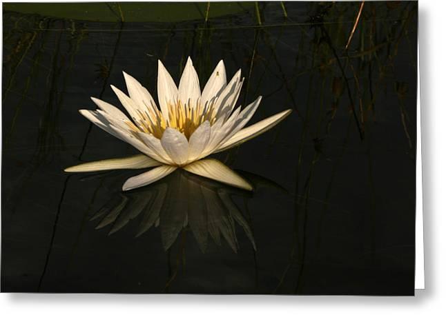 Lilly Pad Greeting Cards - Waterlilly 6 Greeting Card by Karen Zuk Rosenblatt
