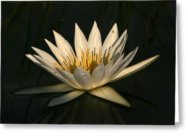 Lilly Pad Greeting Cards - Waterlilly 7 Greeting Card by Karen Zuk Rosenblatt
