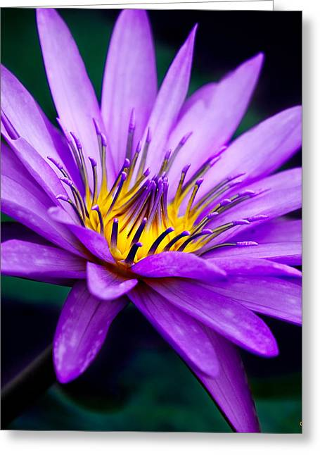 Waterlily #23 Greeting Card by Chris Lord