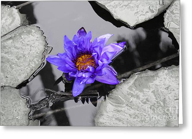 Beach Photography Greeting Cards - Waterlily Beauty Greeting Card by Jennifer White