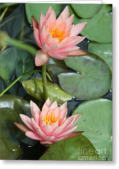 Waterlily Stamen Greeting Cards - Waterlily Duo Greeting Card by Christiane Schulze Art And Photography