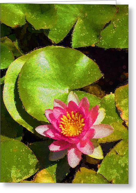 Lilly Pads Greeting Cards - Waterlily - Happy Pink Impression - V Greeting Card by Georgia Mizuleva