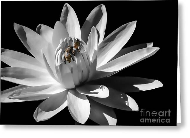 Water Lilies And Insects Greeting Cards - Waterlily With Bees Greeting Card by Marilyn Michalec
