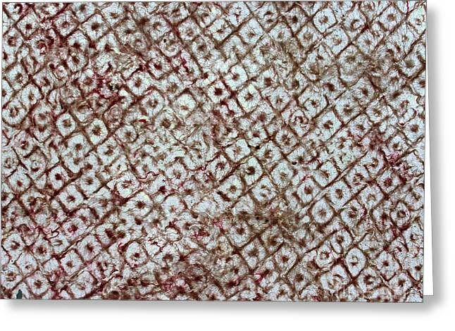 Contemporary Abstract Tapestries - Textiles Greeting Cards - Watermark 1 Greeting Card by Dalani Tanahy