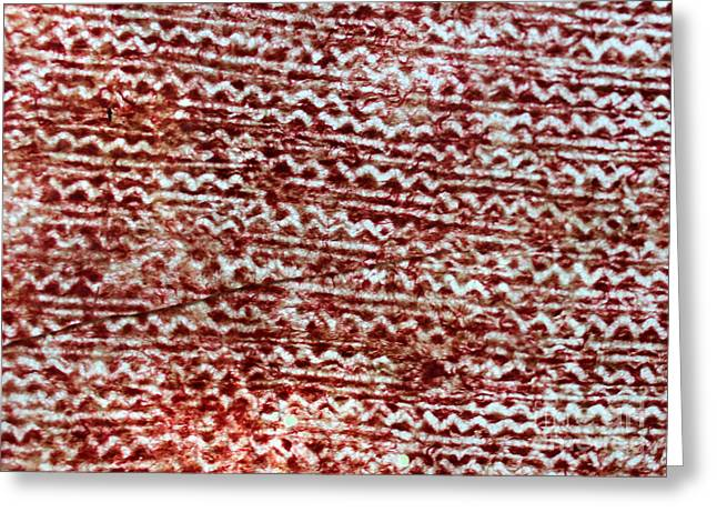 Thread Tapestries - Textiles Greeting Cards - WaterMark 4 Greeting Card by Dalani Tanahy