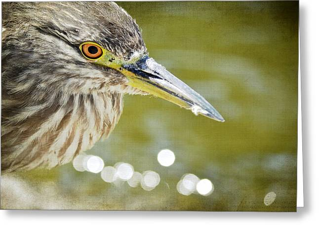 Crowned Heron Greeting Cards - Waterside Greeting Card by Fraida Gutovich