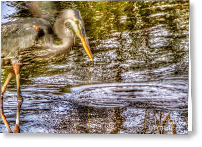 Wadingbird Greeting Cards - Watery heron Greeting Card by Rrrose Pix
