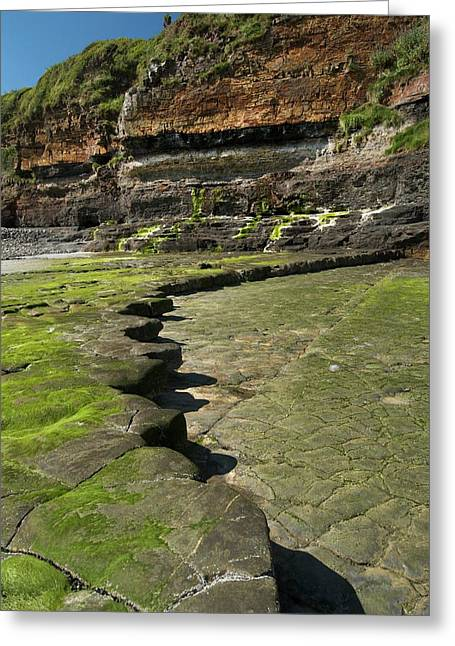 Wave Cut Platform At East Amroth Greeting Card by Sinclair Stammers