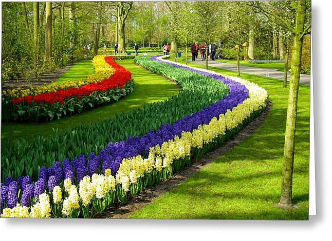 Geobob Greeting Cards - Wave of Flowers in Keukenhof Park and Gardens Lisse Netherlands Greeting Card by Robert Ford