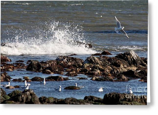 Flying Seagull Greeting Cards - Waves Wind and Whitecaps Greeting Card by John Telfer