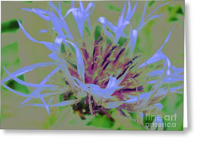 Centaurea Montana Greeting Cards - Waving Blue Greeting Card by Dana Hermanova