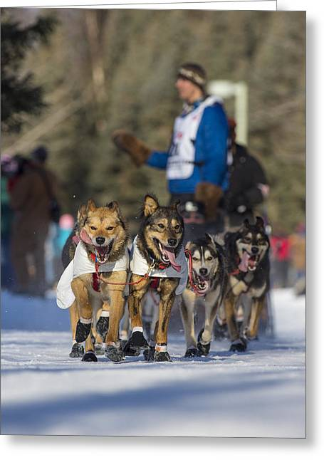 Dog Sled Racing Greeting Cards - Waving to the Fans Greeting Card by Tim Grams